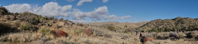 Cap Rock Trail, Joshua Tree, California