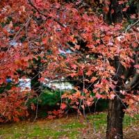 Autumn Tree Portrait
