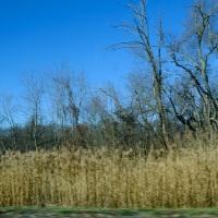 Turnpike Trees